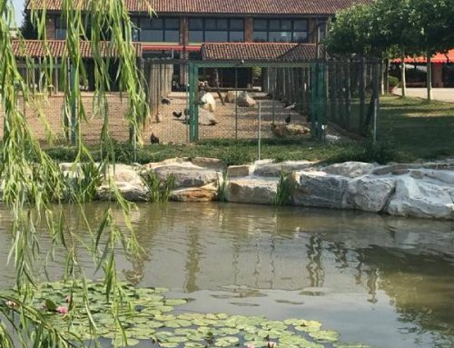Agriturismi per bambini vicino a Varese