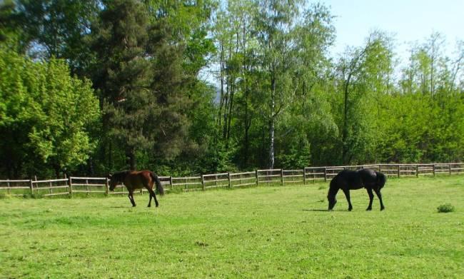 cavalli nel prato cassinazza