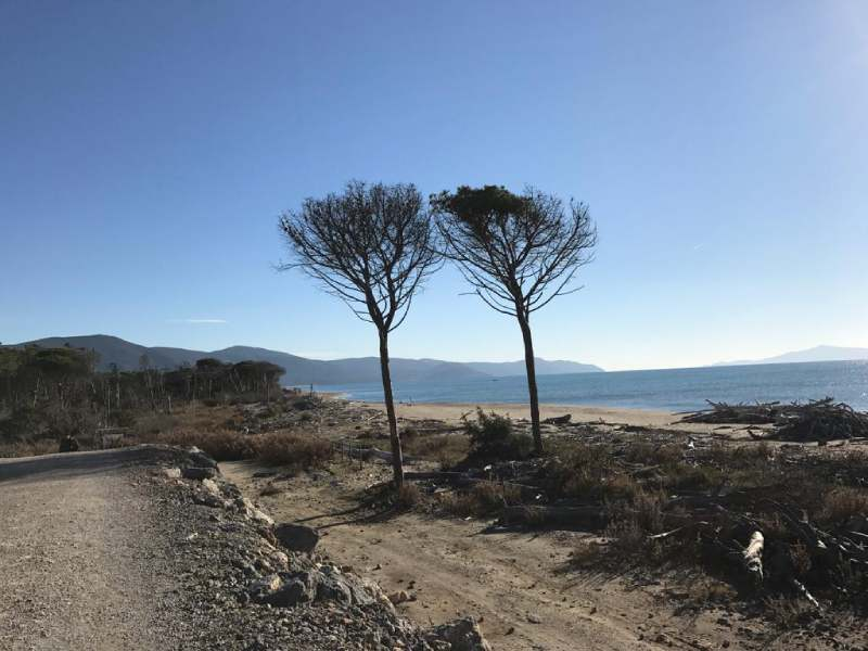 parco della maremma alberi e spiaggia