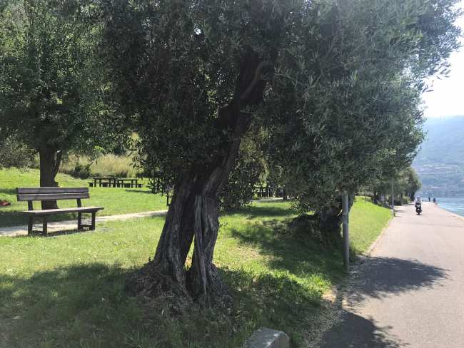 monte isola lago d'iseo ulivi