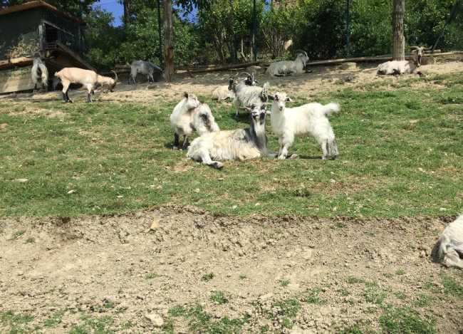 agriturismi a modena provincia capre