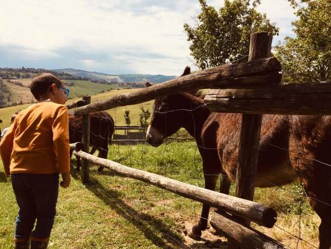 agriturismi a modena provincia cavalli