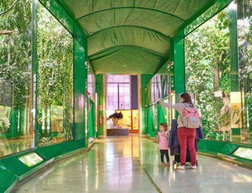 Una giornata al museo di storia naturale con i bambini