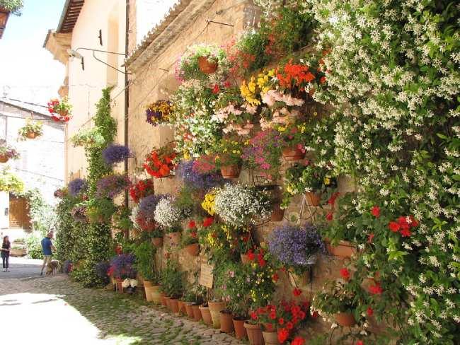 spello_fiori