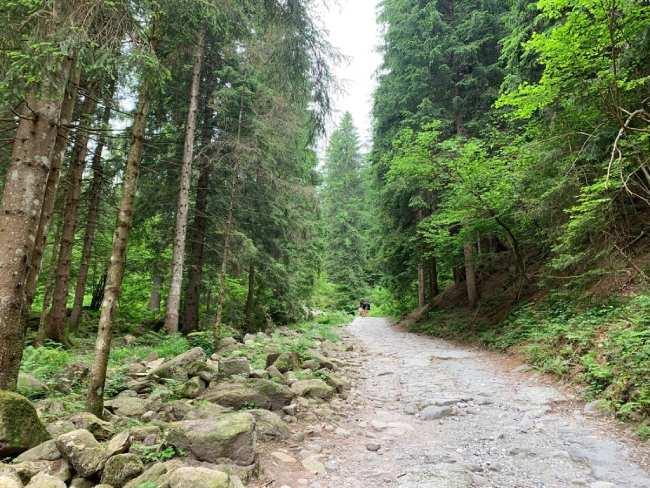sentiero alpe corte