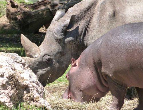 Parco Natura Viva, un vero safari con i bambini in Veneto