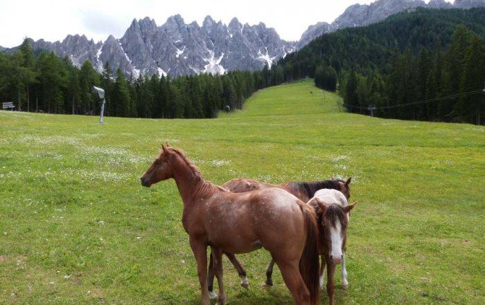 cavalli monte baranci