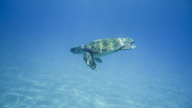 tartaruga zante